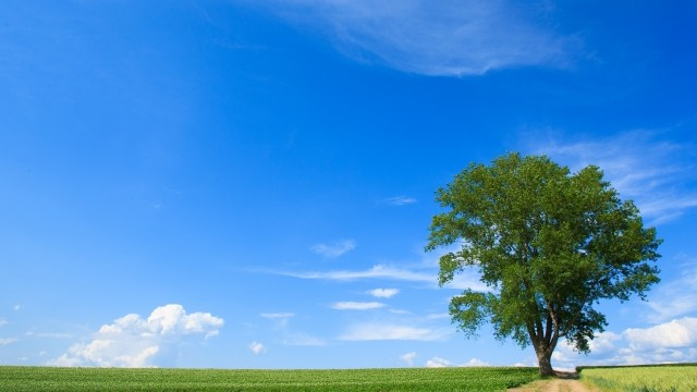 算命学における三分法と樹木