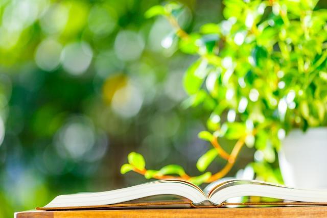算命学における自然:木漏れ日と本