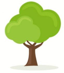 陽木性の甲木